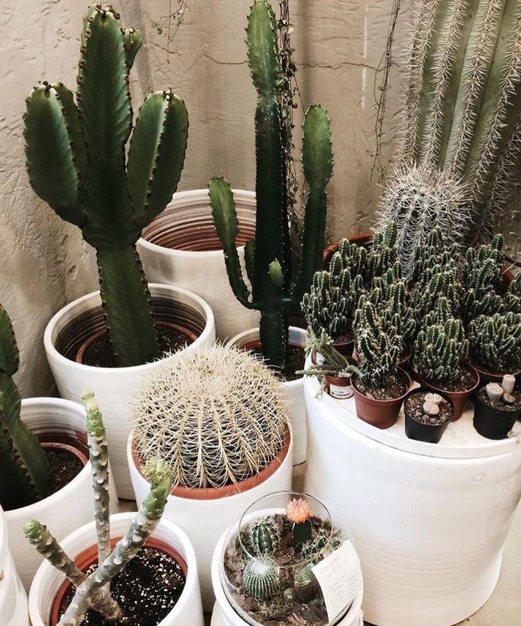 Daily Inspiration Cacti Liberty Brazil Freedom Political 123 Best Botanical  Cactus Shop Images On Pinterest