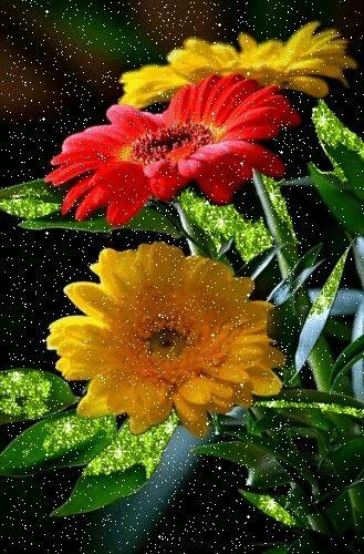 Cool....flower