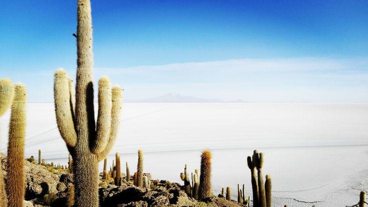Isla Incahuasi Salar de Uyuni Bolivia [OC] [4160 x 2336]