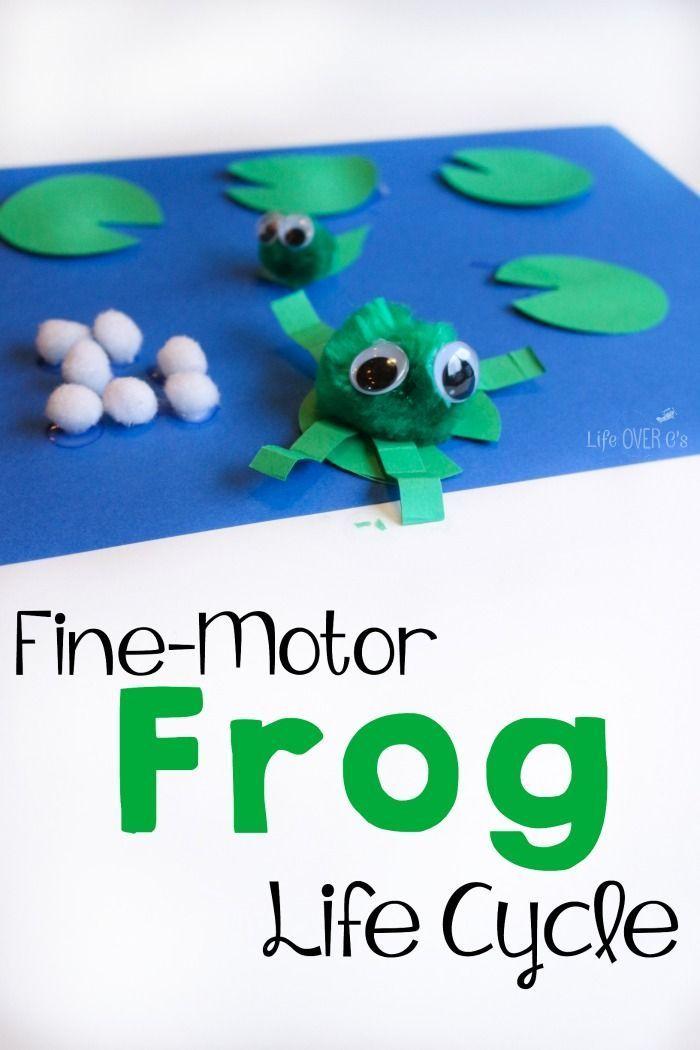 5 frogs aristocrat motors