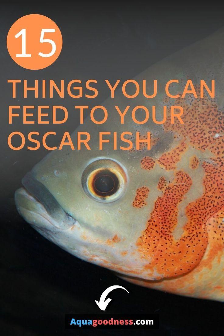 What Do Oscar Fish Eat A Complete Guide Aqua Goodness In 2020 Oscar Fish Tiger Oscar Fish Freshwater Aquarium Fish