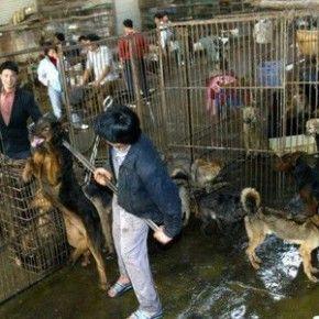 Una petizione internazionale che chiede all'Unione europea d'imporre sanzioni alla Cina affinché introduca leggi a tutela del benessere e dei diritti degli animali, troppo spesso violati.