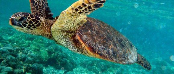 Quanto Vive una Tartaruga d'Acqua Dolce