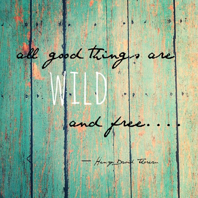 Creative Carmella: The Wild One.... A Little About Liam ~ beautiful post about embracing our children.