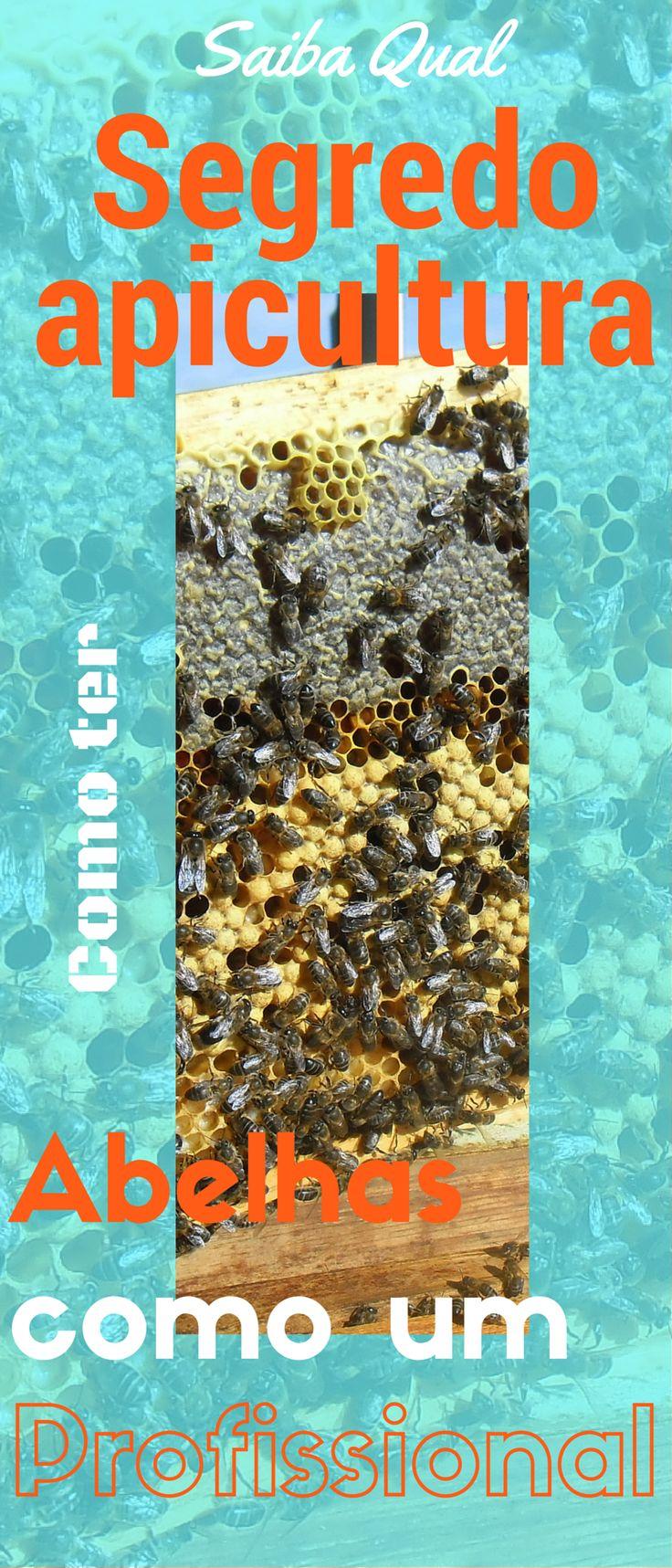 Se quer tirar algum mel  Ou seguir com um negócio  Tem que ter algum aprendizado. http://apicosta.com/os-segredos-da-apicultura/