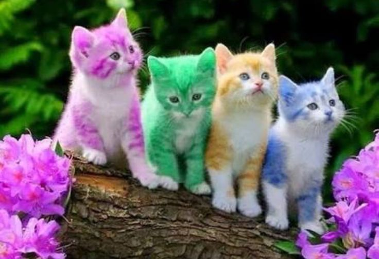 Colourful kittens WOW