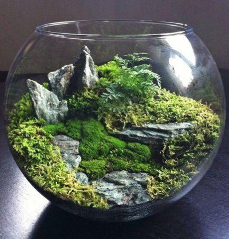 A vegetação, com musgos, e as rochas fazem deste terrário uma verdadeira floresta em miniatura.