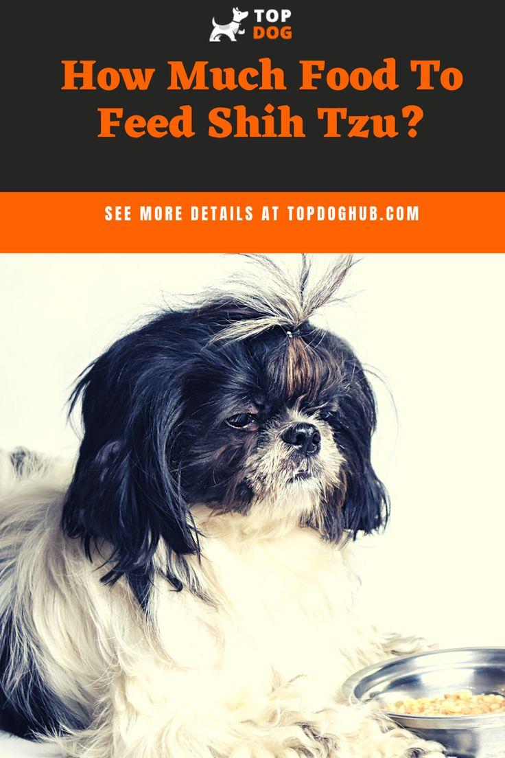 How much food to feed shih tzu best dog food shih tzu
