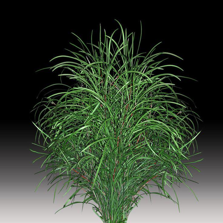 Barker bush #premiumgreensaustralia