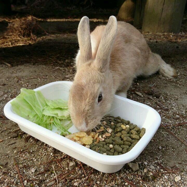 おはようございます 今朝も マヒ仔 ちゃん 出てきてくれました 無事で良かった マヒ仔 ちゃん 大久野島 大久野島休暇村 うさぎ島 Rabbit Island 忠海港 Instagram Posts Instagram Animals