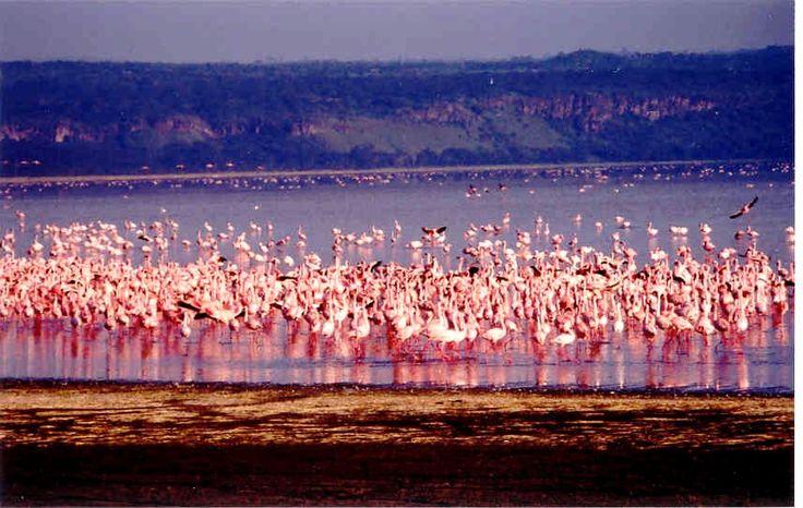 Lake Nakuru, Kenya (May 2005)