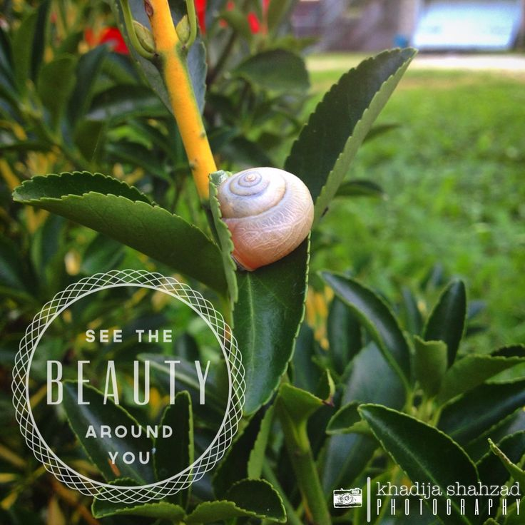 See the #beauty around #you. #quote #wisdom #inspiration #love #nature  #madewithstudio