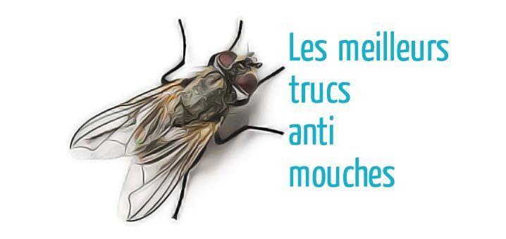 Mouches : S'en débarrasser facilement. Les astuces contre les mouches qui marchent. Pièges, répulsifs, plantes… Les meilleurs trucs anti-mouches.