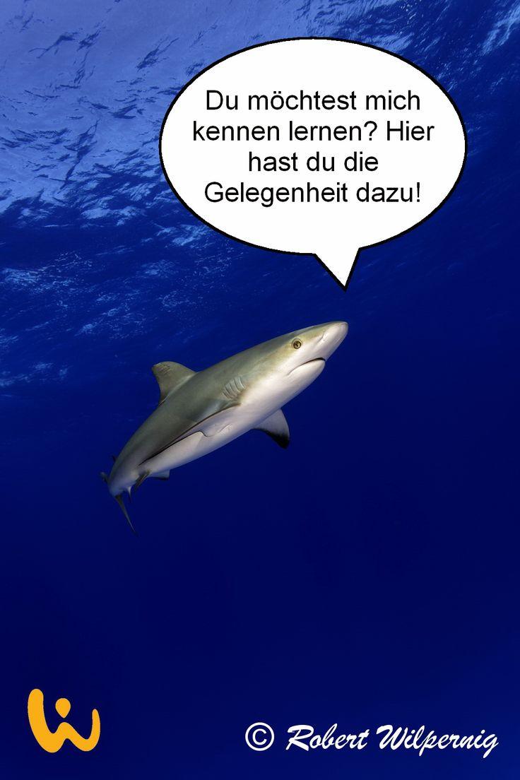 Bei einer SharkSchool lernt Ihr nicht nur den Umgang mit den tollen Riesen sondern auch