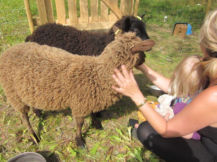 Sheep <3