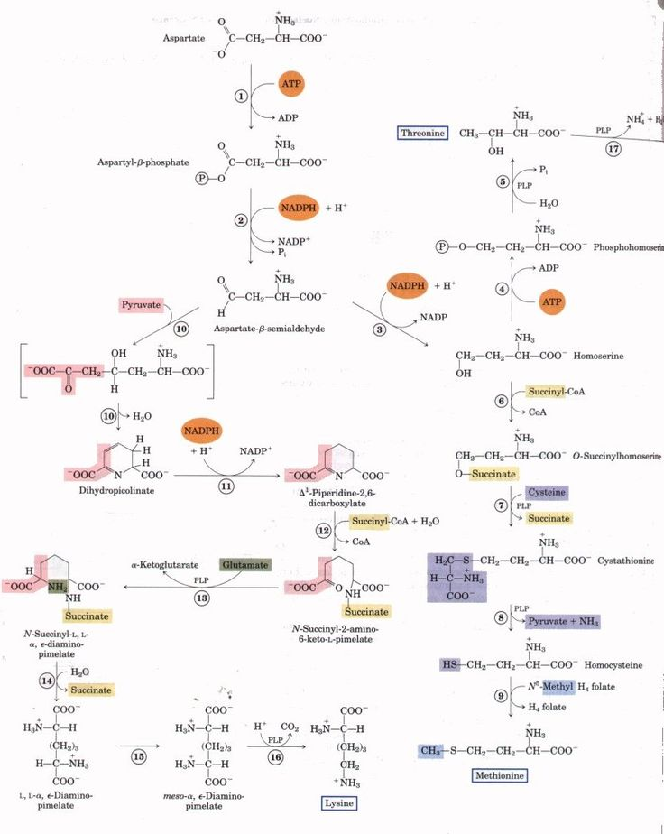 19 best MCAT Study images on Pinterest Biochemistry, Medicine - amino acid chart