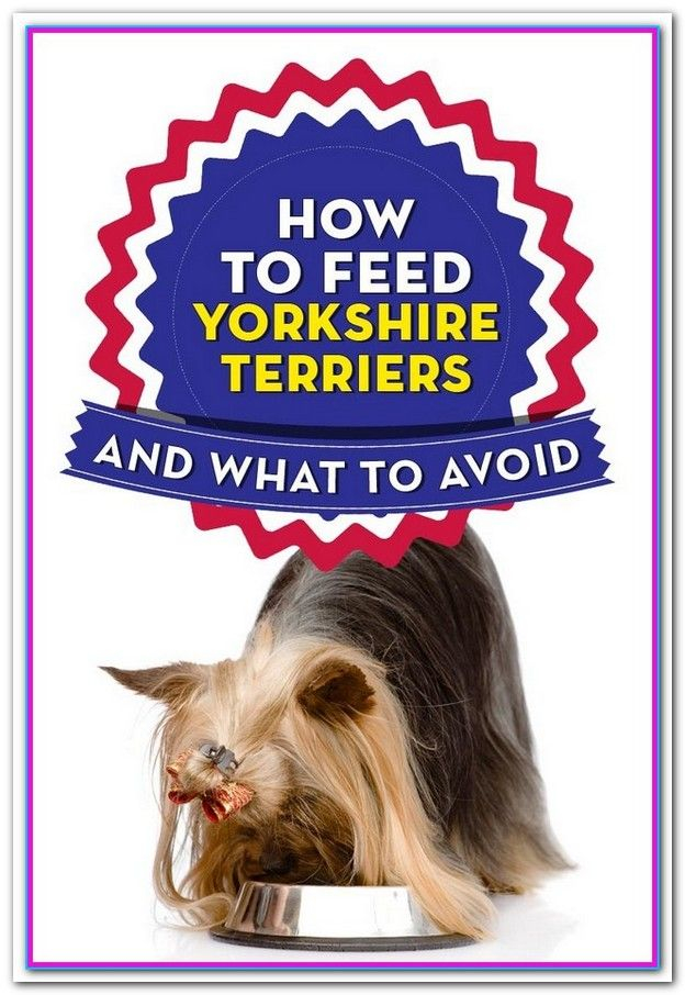 Best Dog Food For Yorkies With Allergies Some Of The Kibbles