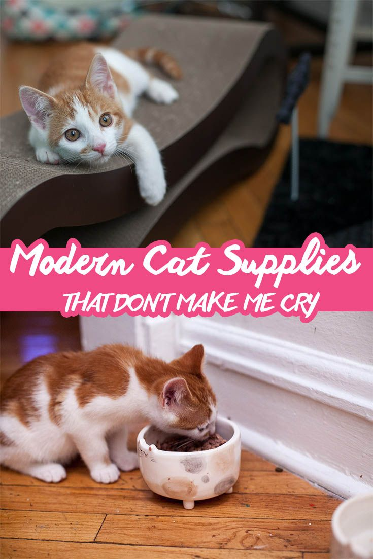 Modern Cat Supplies that Don't Make Me Cry