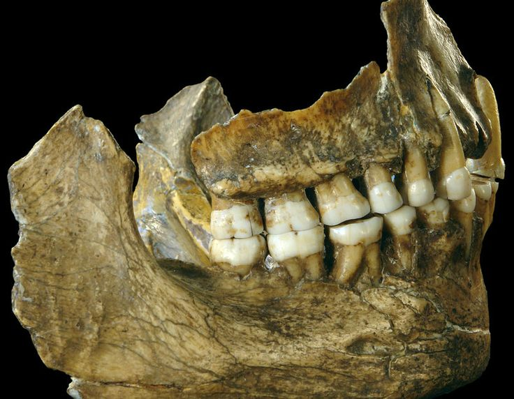 A new study of the dental plaques of three Neanderthals reveals surprising facts about their lives, including what they ate, the diseases that ailed them and how they self-medicated (and smooched).