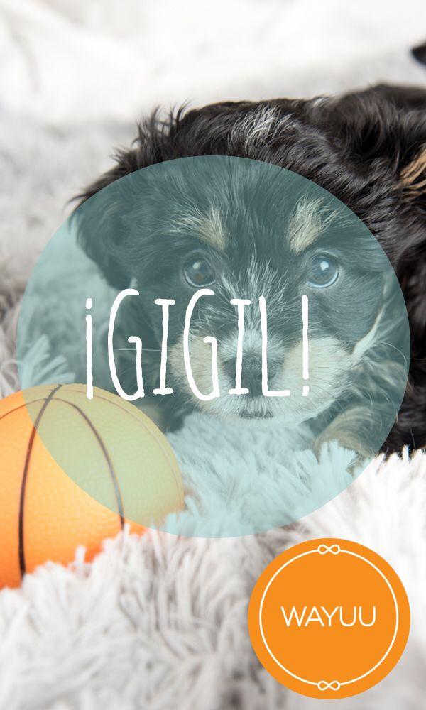 Gigil: (palabra filipina) algo que tan tierno, que lo tienes que pellizcar. #PalabraDelDía #LoAprendíenWayuu