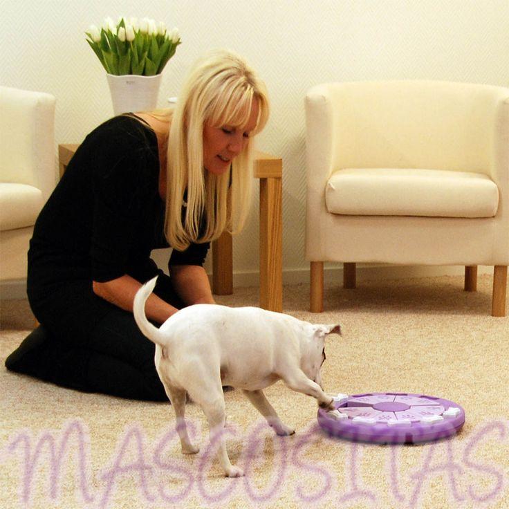 DogTwister tiene el propósito de ocupar a tu perro mentalmente para equilibrar la necesidad de estímulo mental.