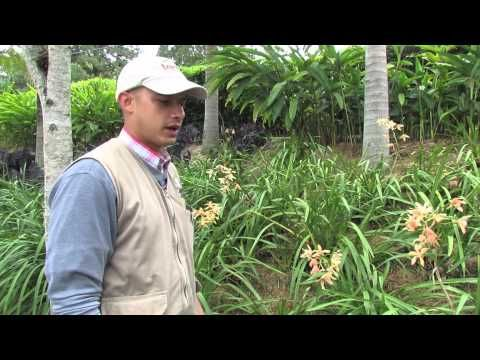 Jardines: El Cimbidio - Terra Prados y jardines. El cimbidio, una variedad de orquídea muy sencilla de cultivar y mantener  www.terra.net.co  Música Last.fm - Josh Woodward - East Side Bar  Tel: (4) 3860181 • Fax: (4) 3861916 • Cel: 315 5862813 Vía las Palmas, Km 17, Centro Comercial Indiana, Of 226. Envigado, Colombia