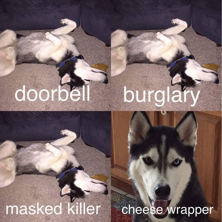 Siberian Huskies...