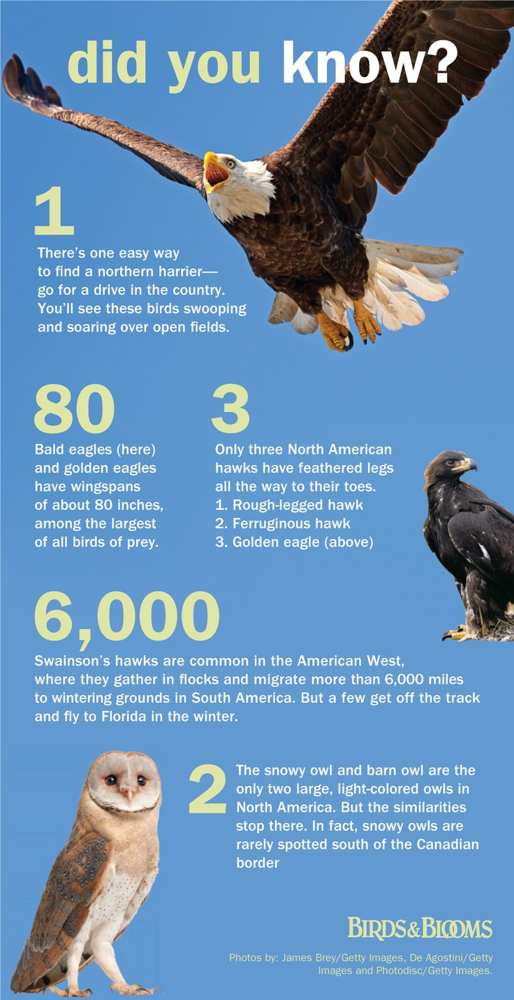 Fun facts about birds of prey from Birds and Blooms Magazine. Use with Apologia Flying Creatures http://shop.apologia.com/63-zoology-1
