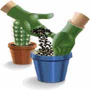 Rempoter cactus et plantes grasses - Ajouter du terreau