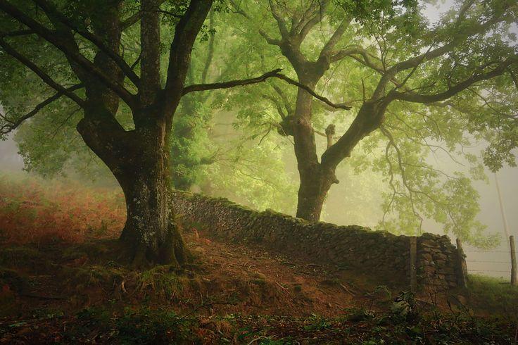 Fog in the forest - Bosque en Oronoz hacia orabidea en el Valle de Baztan, Navarra.
