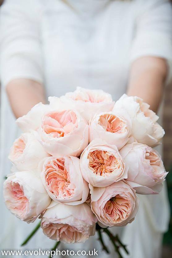 David Austen Juliet Roses