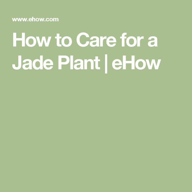 How to Care for a Jade Plant   eHow