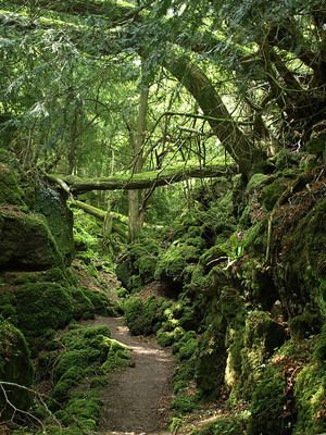 Puzzlewood is an ancient woodland site, near Coleford in the Forest of Dean, Gloucestershire, England, now a tourist attraction. Over a mile of maze like  pathways provide access to the woods, secret caves, and ancient trees.
