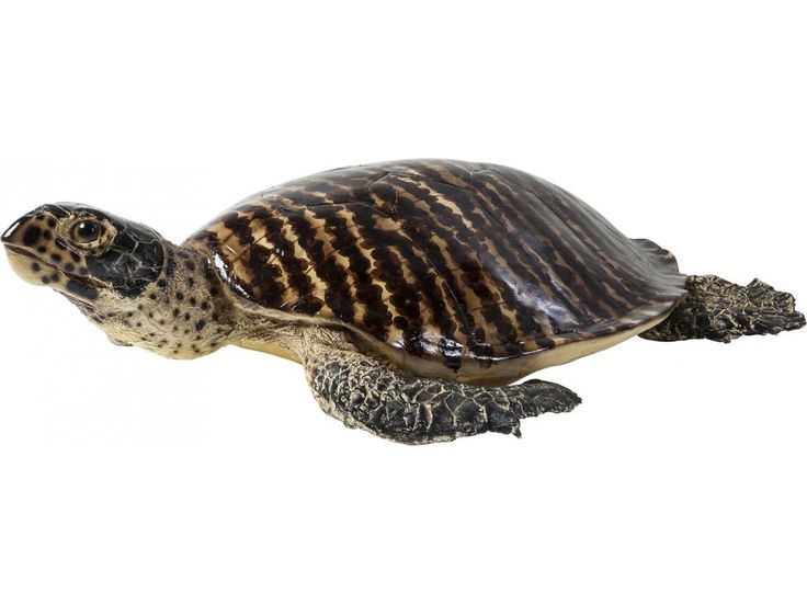Figurka Dekoracyjna Turtle I — Figurki dekoracyjne — KARE® Design