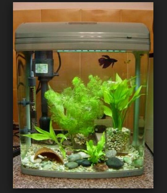 9 best fish images on pinterest fish aquariums fish for Betta fish tank size