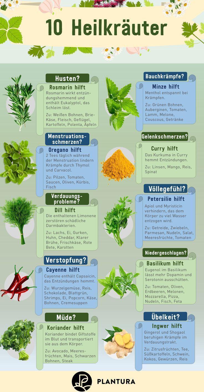 10 Heilkrauter Wir Zeigen Euch Die Besten Heilpflanzen Aus Dem Eigenen Garten Gegen Husten Bauchk Heilpflanzen Pflanzen Gesunde Krauter