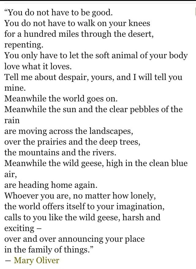wild geese by mary oliver Mary oliver (b september 10, 1935) is among the most beloved and most prolific poets of the past century — a devoted craftswoman of exquisite poems and a sage of the secrets of the craft itself.