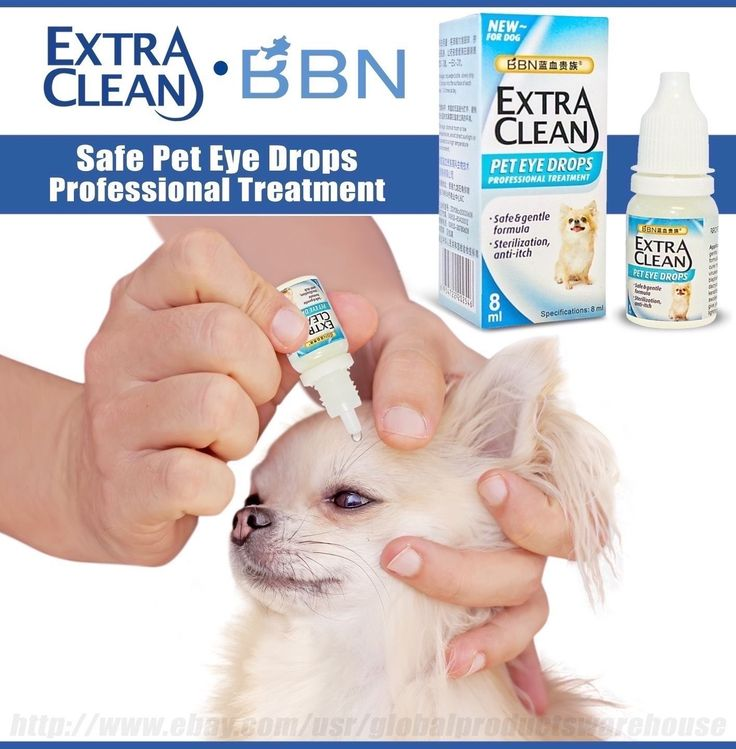 Best Dog Infection Conjunctivitis Pink Eye Drops Red Irritation Dry Itch Allergy