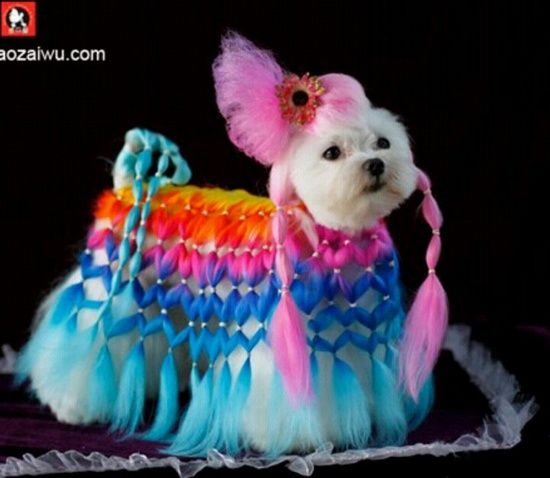 Extreme Dog Grooming   dog grooming / Omg thats dedication ... extreme dog grooming