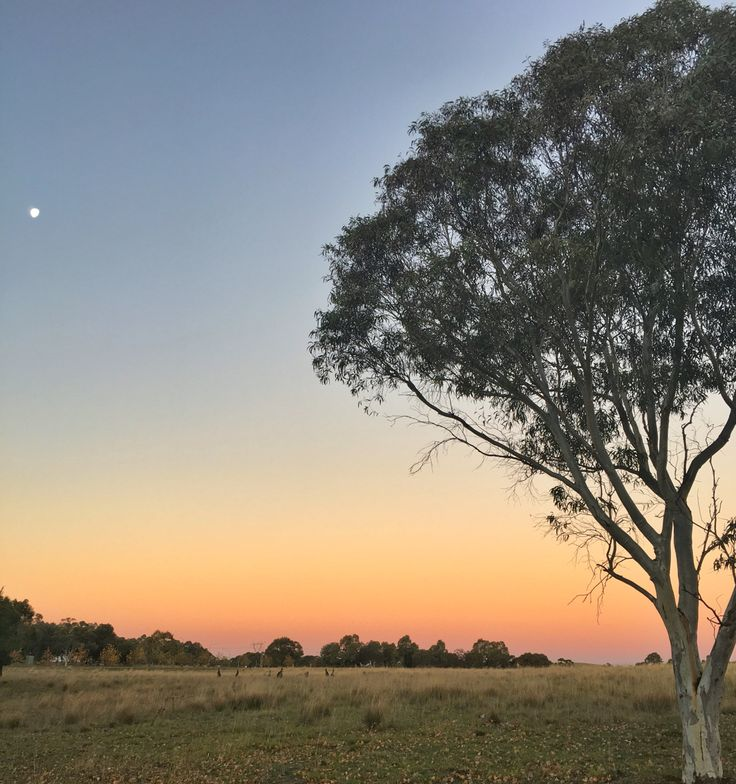 Sunset, Lake Ginninderra Heart Tree