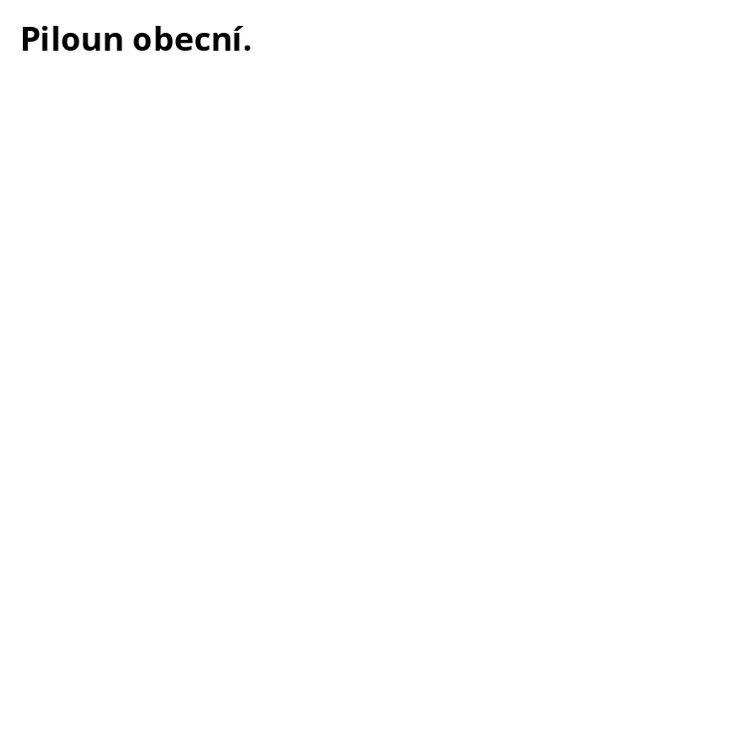 Nový piloun