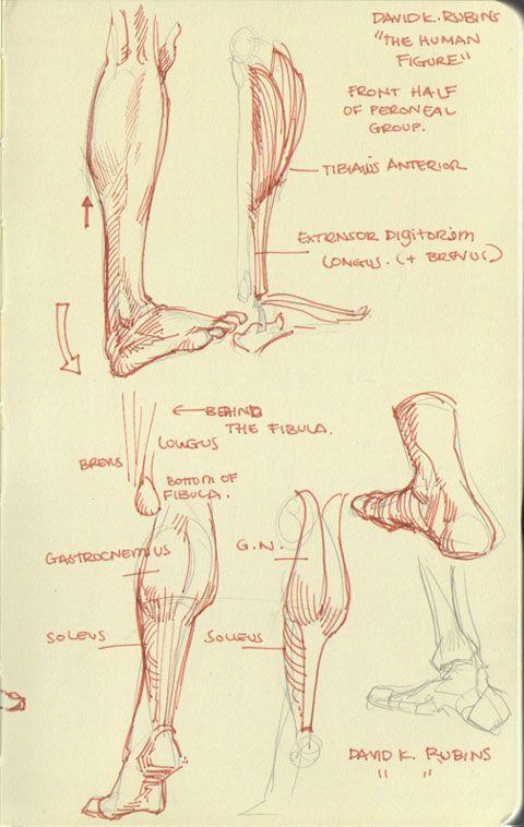 Arakaki-dessin-anatomie-humaine_7