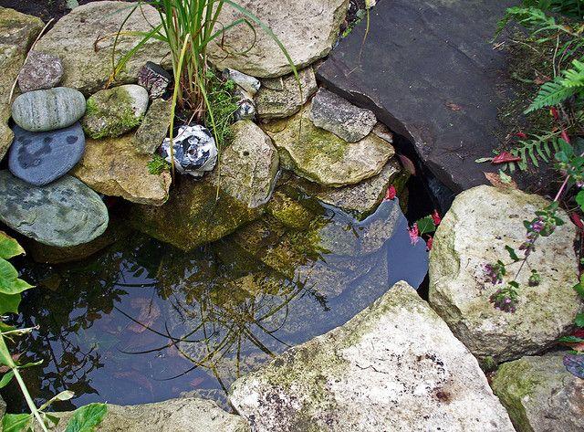 17 Best Images About Wildlife Pond On Pinterest Gardens 400 x 300