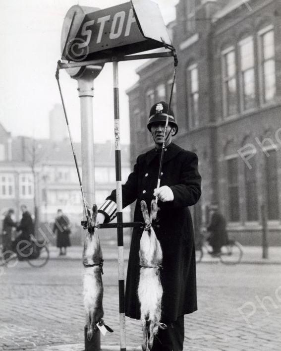 Rabbits Given As Gift To Traffic Officer 1939 Vintage 8x10 Reprint Of Old Photo