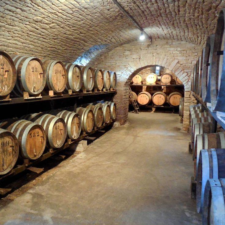 Une visite dans les caves du Jura est incontournable en toutes saisons   Jura, France   Photo de A. Mahthie/Jura Tourisme   #JuraTourisme