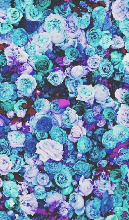 Blue, Roses, Picture, Floral | w a l l p a p e r ...