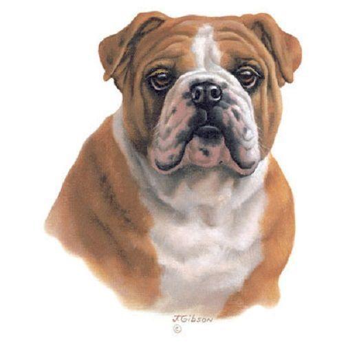Bulldog Dog HEAT PRESS TRANSFER PRINT for T Shirt Sweatshirt Bag Fabric #821b  #AB