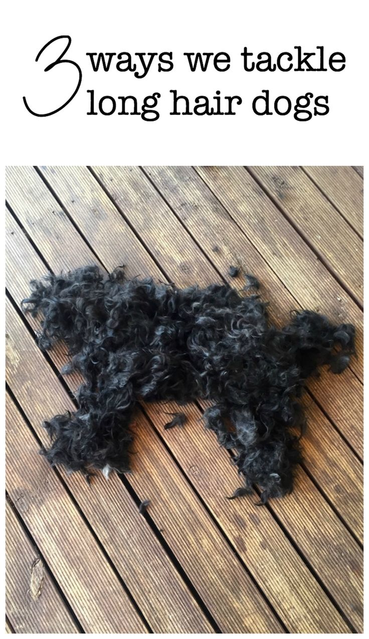 3 ways we tackle caring for dogs with long hair