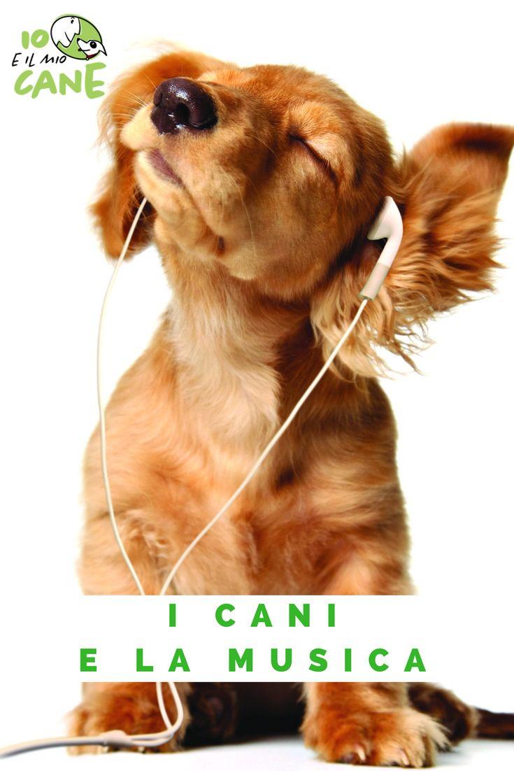 Cosa produce la musica in un cane?