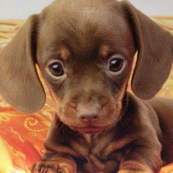 132 Happiest Dogs ล กหมาลาบราดอร ส ตว เล ยง ล กหมา